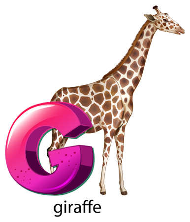 g giraffe: Illustration of a letter G for giraffe on a white background