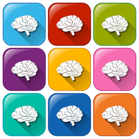 centralized: Illustration of the buttons with brain organ on a white background