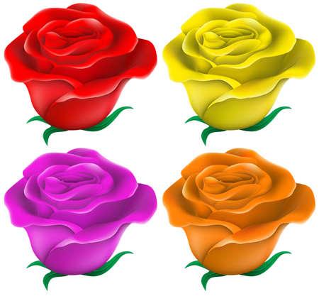 ton: Rengarenk güller ton beyaz bir arka plan çizimi