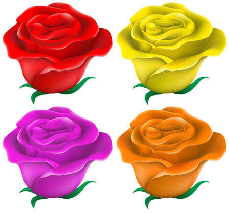 Illustration of the colourful roses ton a white background