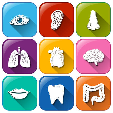 Illustration of a set of organ icons Vector