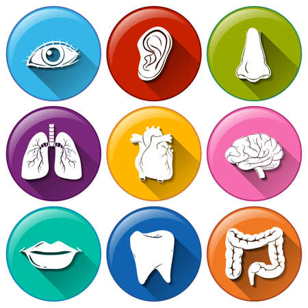 body parts: Illustration of the buttons with the different body parts on a white background