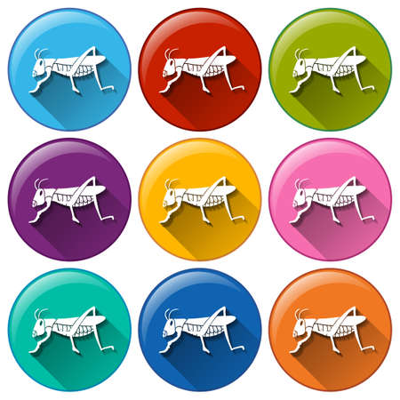 insecta: Illustration of the round icons with insects on a white background