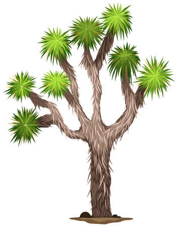 Illustration of the Yucca brevifolia tree on a white background