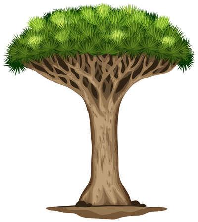 흰색 배경에 용의 피 나무의 그림 일러스트