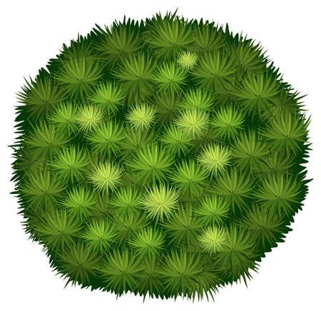 bovenaanzicht plant: Illustratie van een close-up Blood Bragon Stock Illustratie
