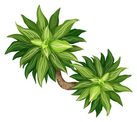 bovenaanzicht plant: Illustratie van de Koningin van Dracaena Stock Illustratie