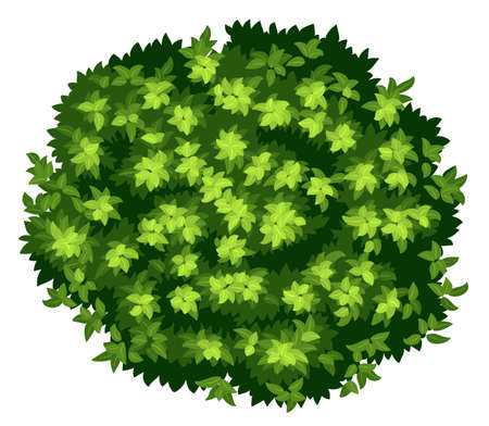 arbre vue dessus: Illustration d'un gros plan pyrus calleryana Illustration