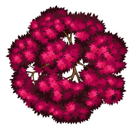 bovenaanzicht plant: Illustratie van een close-up Bloodgood Japanse esdoorn