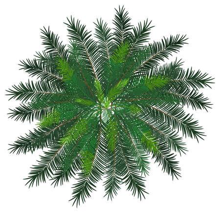 bovenaanzicht plant: Illustratie van een close-up van Norfolk eiland
