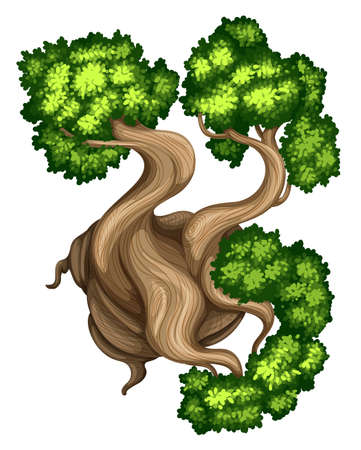 bristlecone: Illustration of a topview of a bristlecone pine tree on a white background
