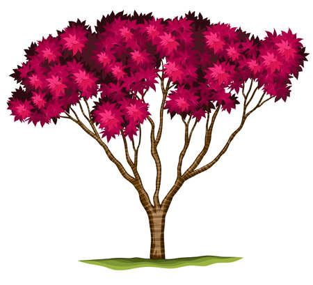 Illustration of a bloodgood Japanese maple plant on a white background Illustration