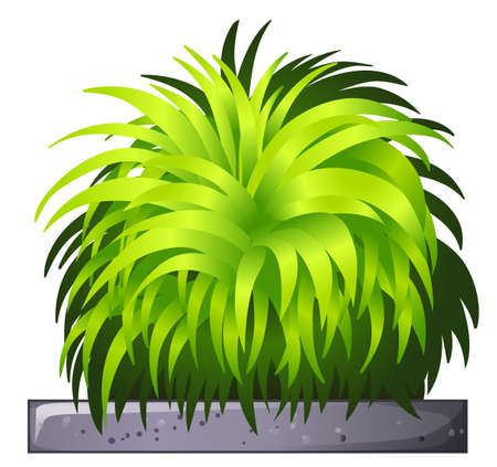 Illustration of a decorative plant on a white background Vector