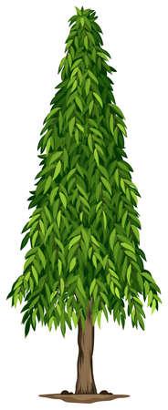 ashoka: Illustration of a tall ashoka tree on a white background