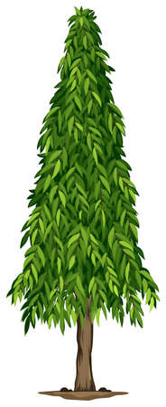 Illustration of a tall ashoka tree on a white background