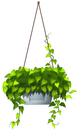 plantae: Illustration of a hanging plant on a white background