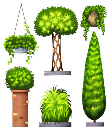 Illustration of the different decorative plants on a white background Vector