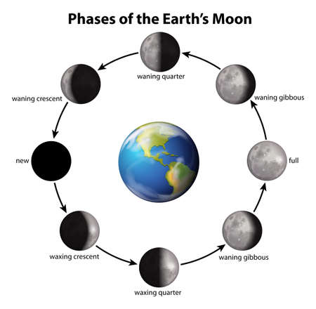 Phases of the Earths Moon on a white background Vector