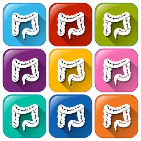 intestines: Botones con los intestinos en un fondo blanco