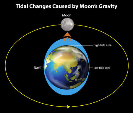 An image showing the tidal changes caused by the moons gravity