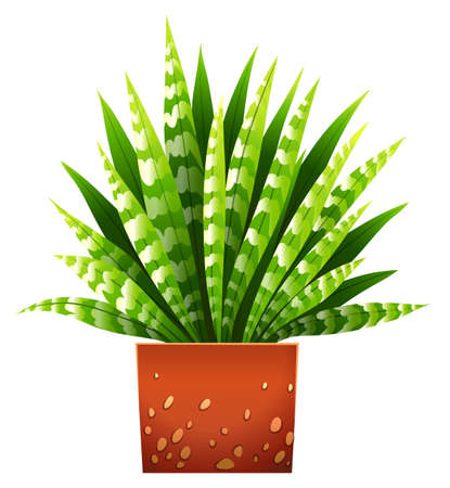 plantae: A houseplant with a pot on a white background
