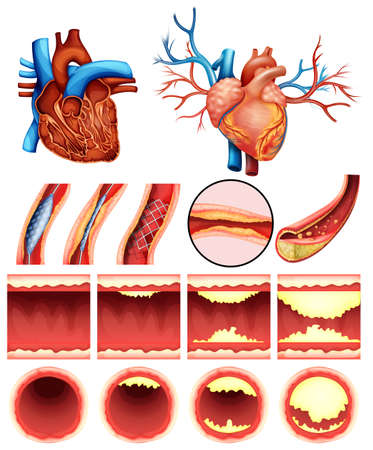 white background: An image showing the heart cholesterol on a white background Illustration