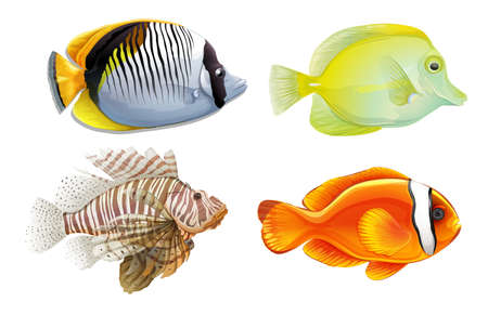 A set of 4 tropical fish Vector