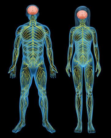 Het menselijke zenuwstelsel op een zwarte achtergrond
