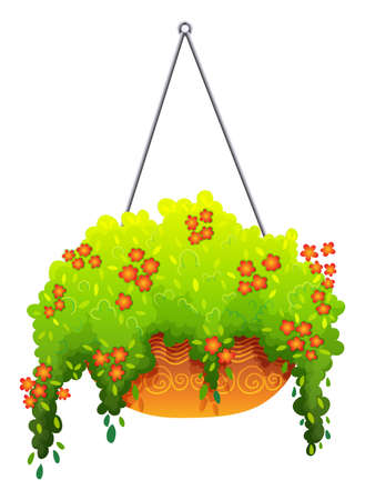 plantae: A hanging green houseplant on a white background Illustration
