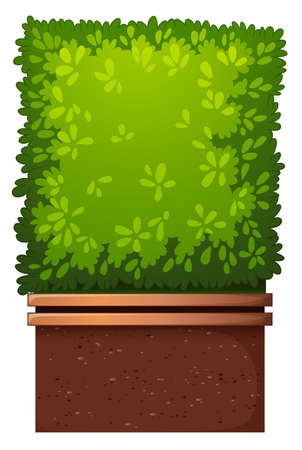 house plant: A green house plant on a white background Illustration