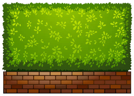 plantae: A landscaping green plant on a white background Illustration