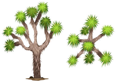 deep roots: A Yucca brevifolia plant on a white background