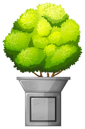 conifers: A green plant on a white background
