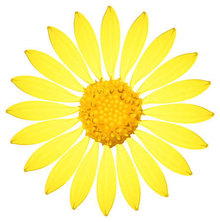plantae: A yellow sunflower on a white background