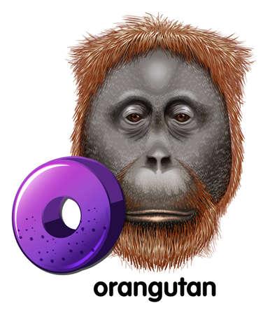 extant: Una letra O para orangut�n en un fondo blanco Vectores