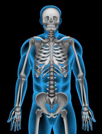 costilla: Sistema de esqueleto de un hombre sobre un fondo negro