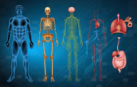 The various human body systems and organs Stock Illustratie