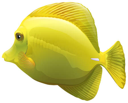 ectothermic: A yellow fish on a white background Illustration