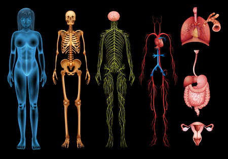 The human body systems and organs on a black background