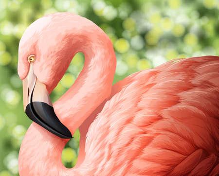 assemblage: A beautiful flamingo