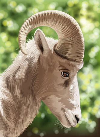 animalia: An image of a wild goat