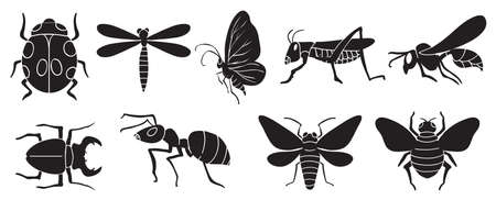 A group of insects on a white background Vector