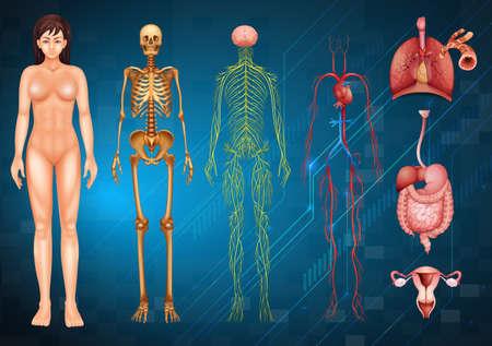 sistema nervioso central: Ilustraci�n de varios sistemas del cuerpo humano y los �rganos