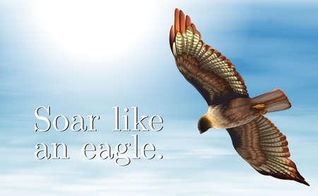 Illustrazione di un volo dell'aquila nel cielo Vettoriali