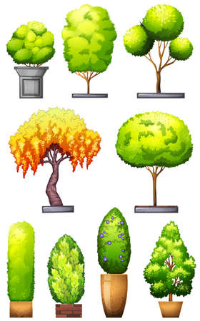 Sets of decorative plants on a white background Vector