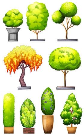 plantae: Sets of decorative plants on a white background