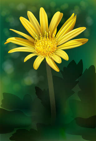 magnoliophyta: A blooming yellow flower Illustration