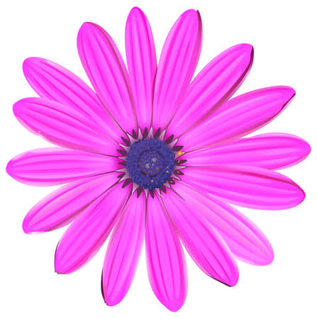 pink flower: A pink flower on a white background Illustration