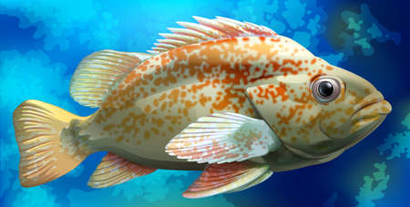 fishes: Illustration of a close up fish