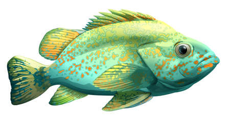 ectothermic: A fish on a white background Illustration